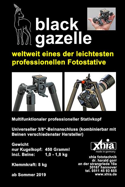black-gazelle